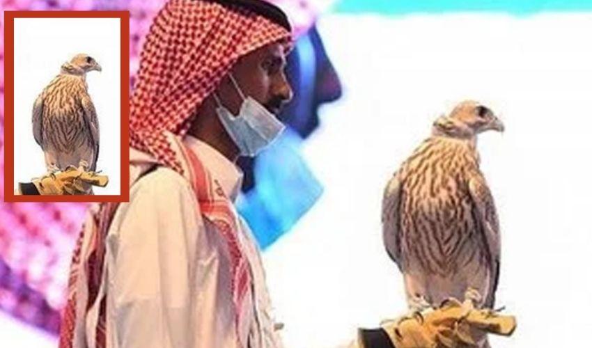Rare Falcon : ఈ గద్ద ధర రూ.3.4 కోట్లు!!
